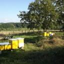 Bijenproject-9kasten-5