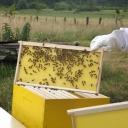 Bijenproject-Kroatie8400-leeuwenbende