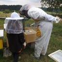 Bijenproject-Kroatie8389-leeuwenbende