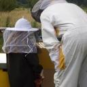 Bijenproject-Kroatie8397-leeuwenbende