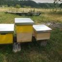Bijenproject-Kroatie8384-leeuwenbende