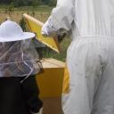 Bijenproject-Kroatie8399-leeuwenbende