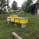 Bijenproject-Kroatie8380-leeuwenbende