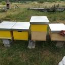 Bijenproject-Kroatie8386-leeuwenbende