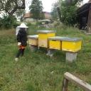Bijenproject-Kroatie8382-leeuwenbende